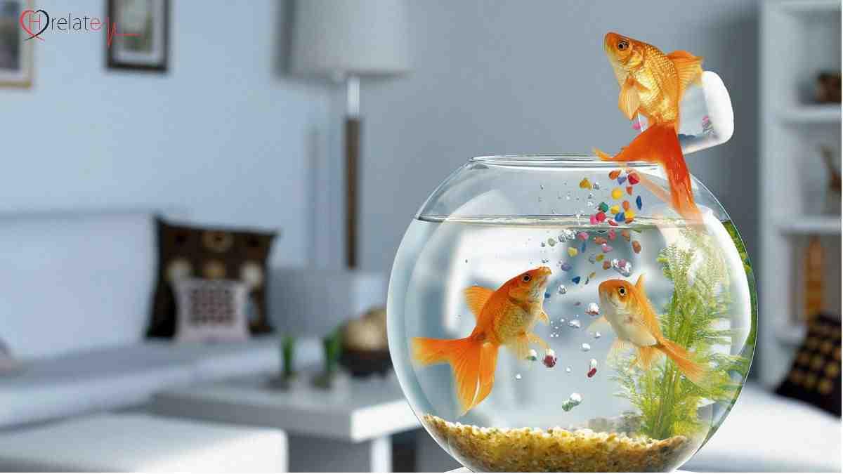 Fish Aquarium Vastu