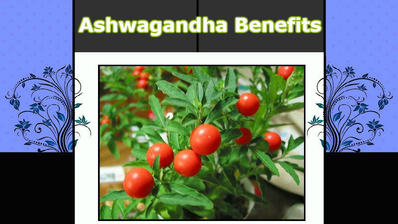 Ashwagandha-Benefits
