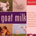 Treasure the Amazing Nutritional Health Benefits of Goat Milk
