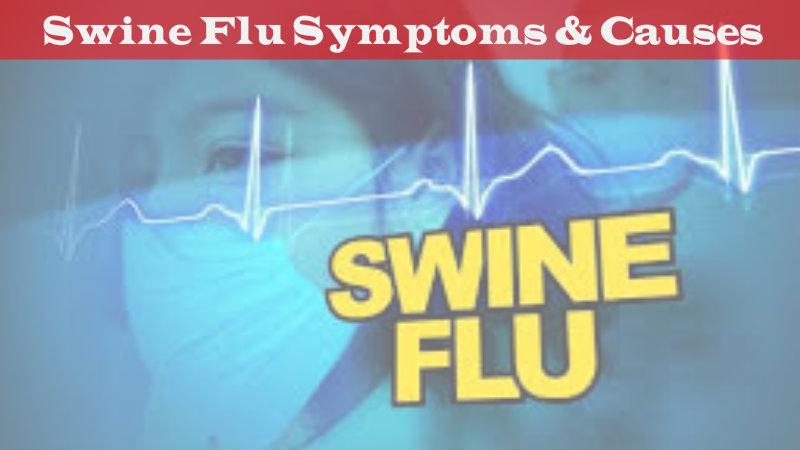 Essay on swine flu