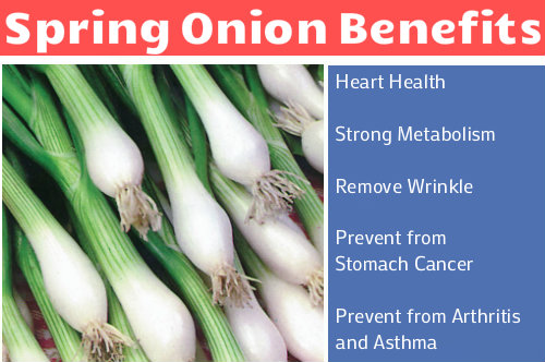 Spring Onion Benefits