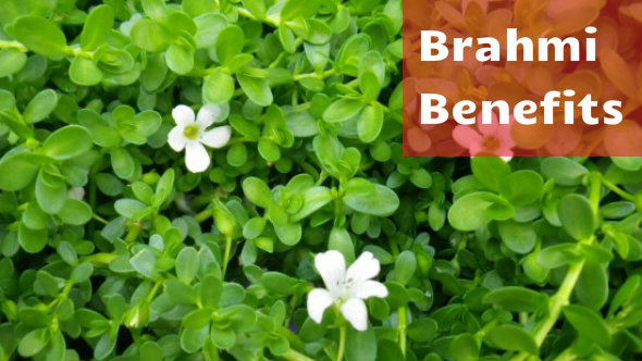 Brahmi Benefits