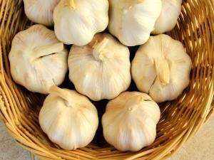 Garlic-Lahsun