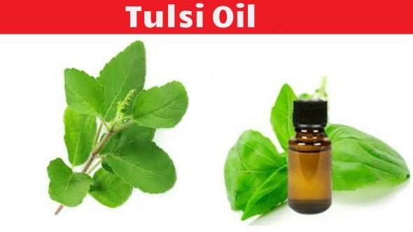 Tulsi Oil
