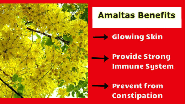 Amaltas-Benefits