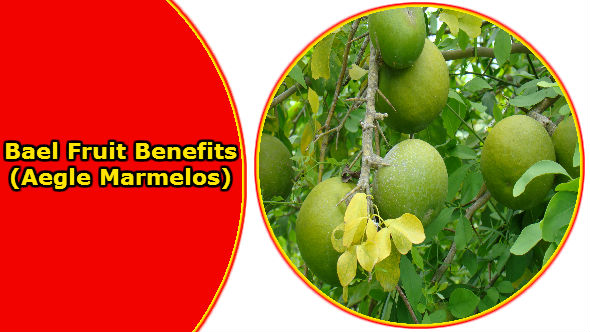 Bael Fruit Benefits-Aegle Marmelos