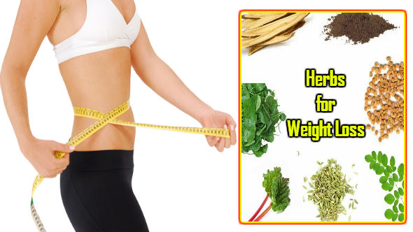 Herbs for Weight Loss in Hindi