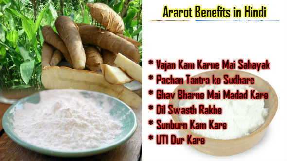Ararot Benefits in Hindi