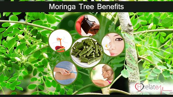 Moringa Tree Benefits