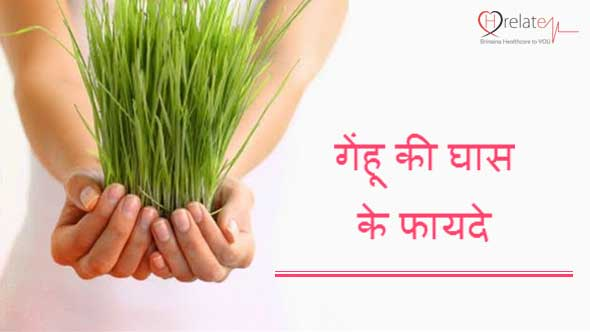 Wheatgrass Benefits in Hindi