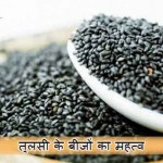 Basil Seeds in Hindi – Kare Sharirik aur Yon Samsya ka Upchar