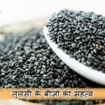 Basil Seeds in Hindi – Kare Sharirik aur Yon Samsya ka Upchar