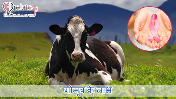 Cow Urine Benefits