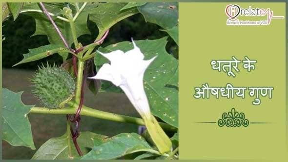 Datura in Hindi
