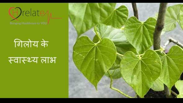 Giloy Benefits in Hindi
