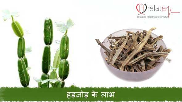 Hadjod in Hindi