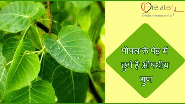 Peepal Tree Benefits in Hindi