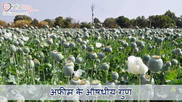 opium in hindi