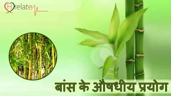 Bamboo plants in hindi