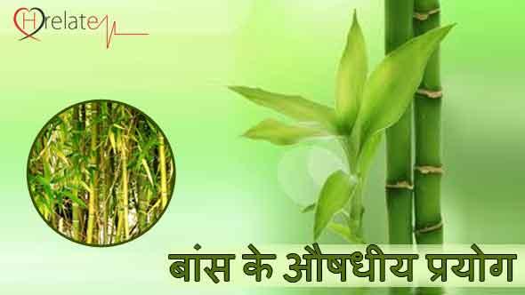 Bamboo plants in hindi