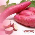 Sweet Potato in Hindi: Swasthya Guno Se Bharpur Shakarkand