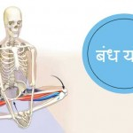 Bandha Yoga in Hindi – Sharir Ke Liye Hai Bahut Faydemand