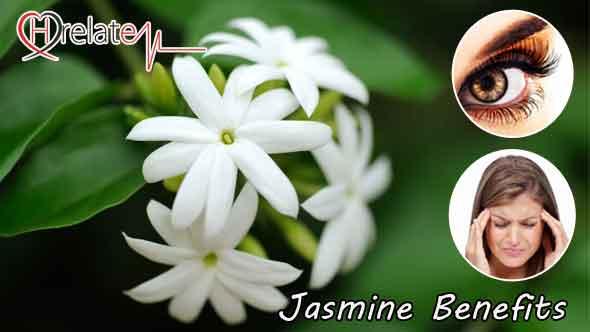 Jasmine Benefits in Hindi