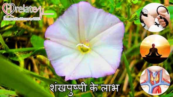 shankhpushpi benefits in hindi