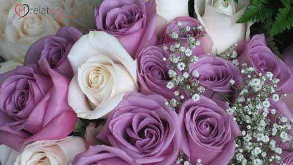Purple Rose – Bengani Gulab