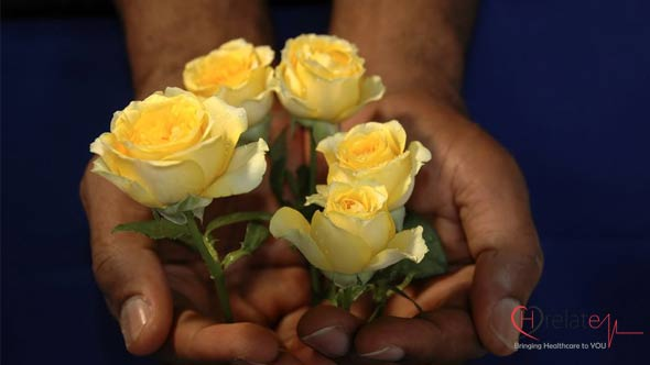 Yellow Rose – Pila Gulab