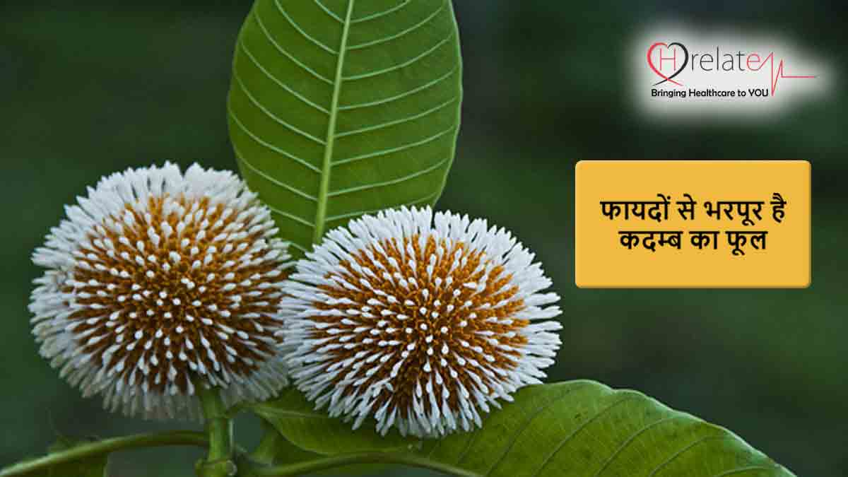 Kadam Tree Benefits