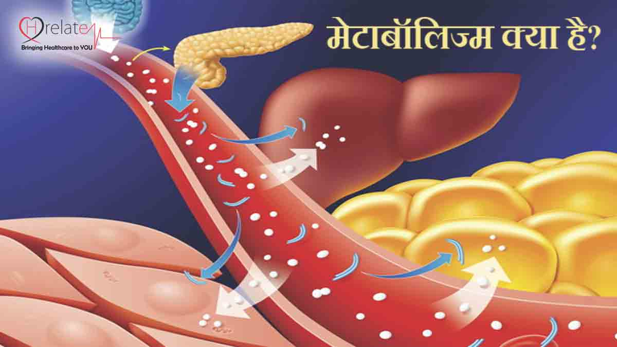Metabolism Facts in Hindi